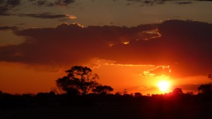 Sunset in Savuti