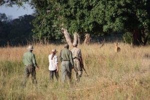 Walking Safari South Luangwa NP