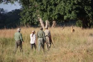 Walking Safari South Luangwa NP
