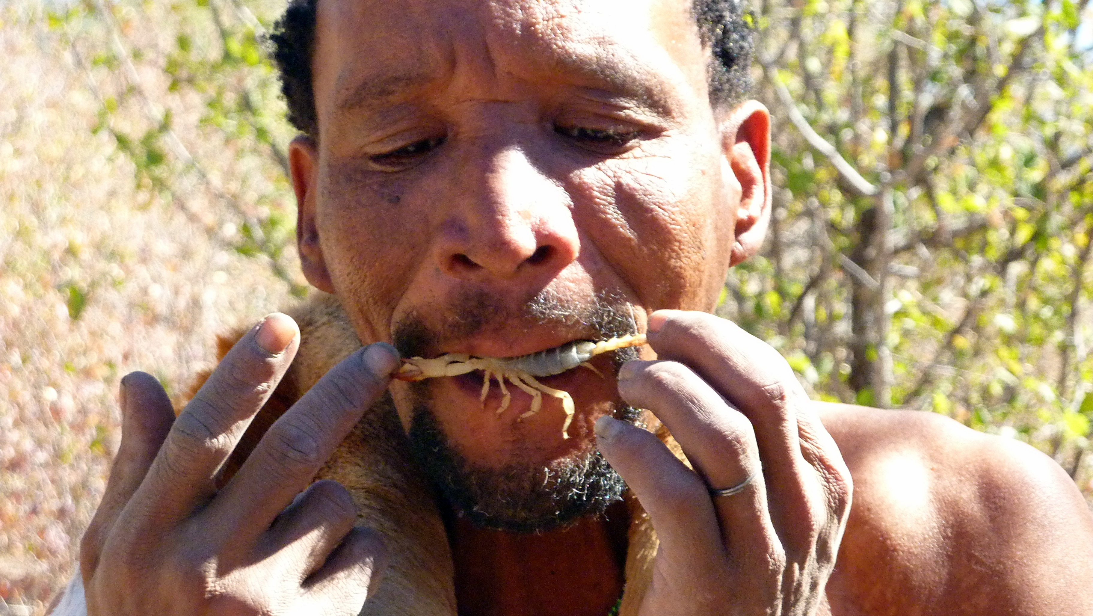 Digging up scorpions with the bushmen at Meno a Kwena