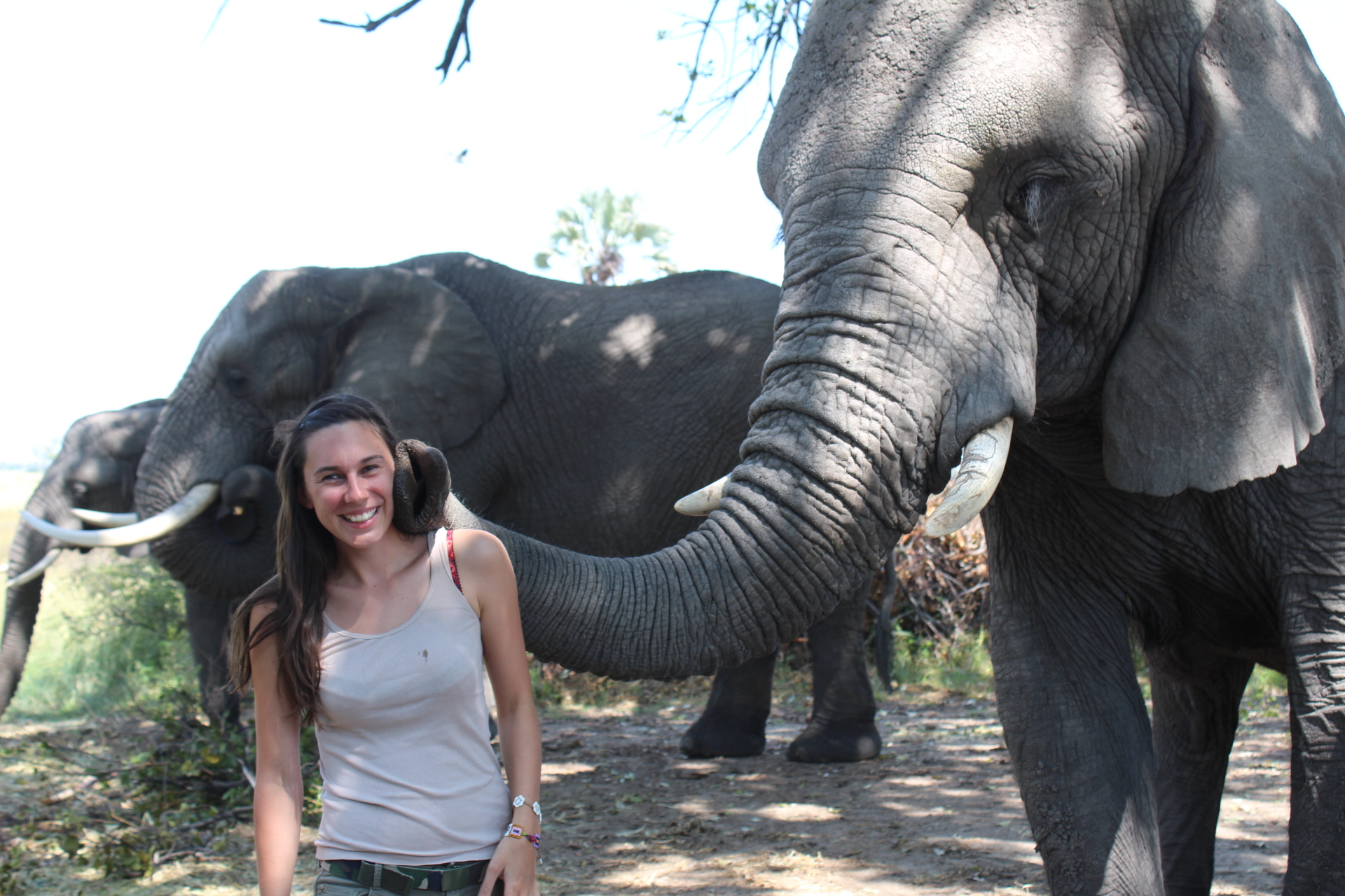 Getting up close and personal with the elephants at Baines' Camp